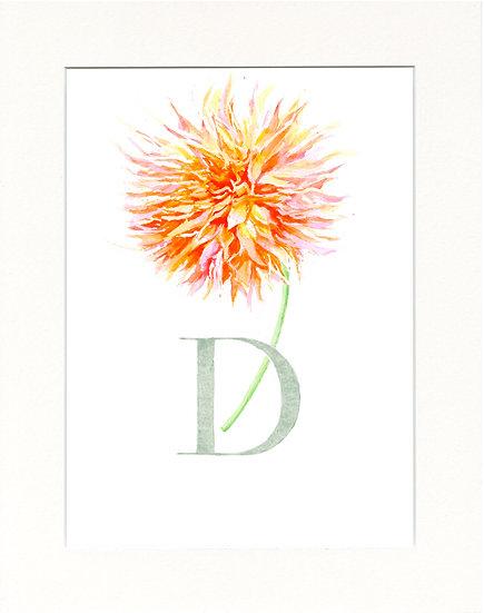 D - Dahlia