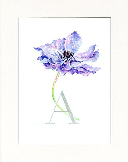 A - Anemone