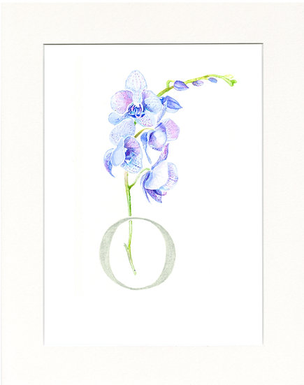 O - Orchid