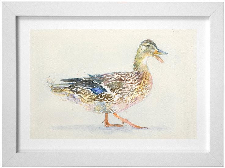 Mrs Duck