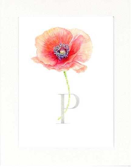 P -  Poppy