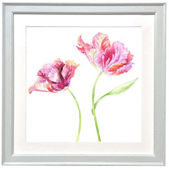 NEW Tulip Duo 1