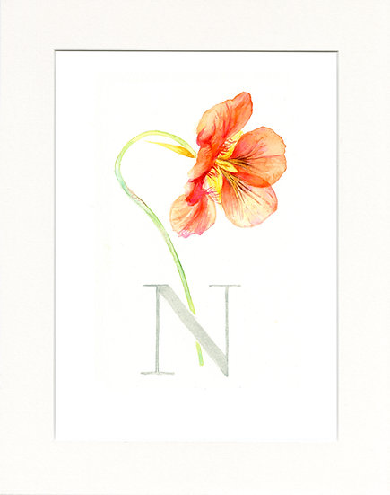 N - Nasturtium