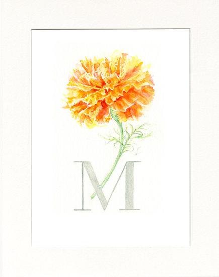 M - Marigold