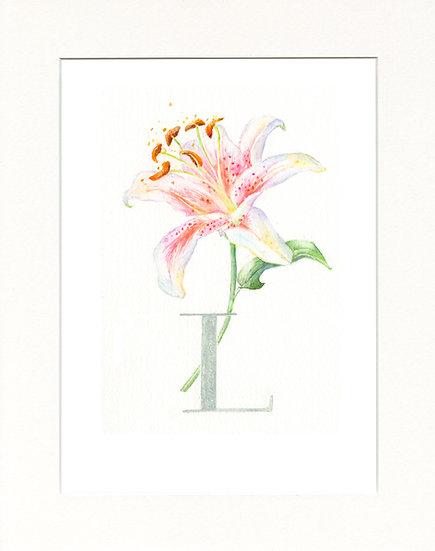 L - Lily
