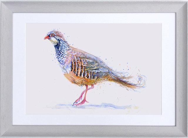 Pink Legged Partridge (Framed print)
