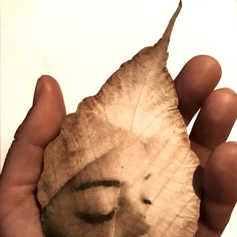 She, leaves
