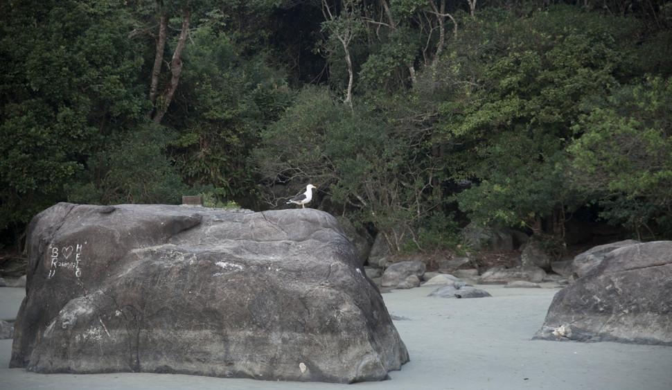 5 a pedra e a ave.jpg