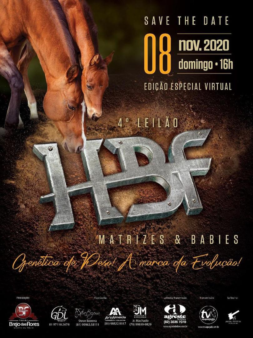 Leilão HBF matrizes e babys