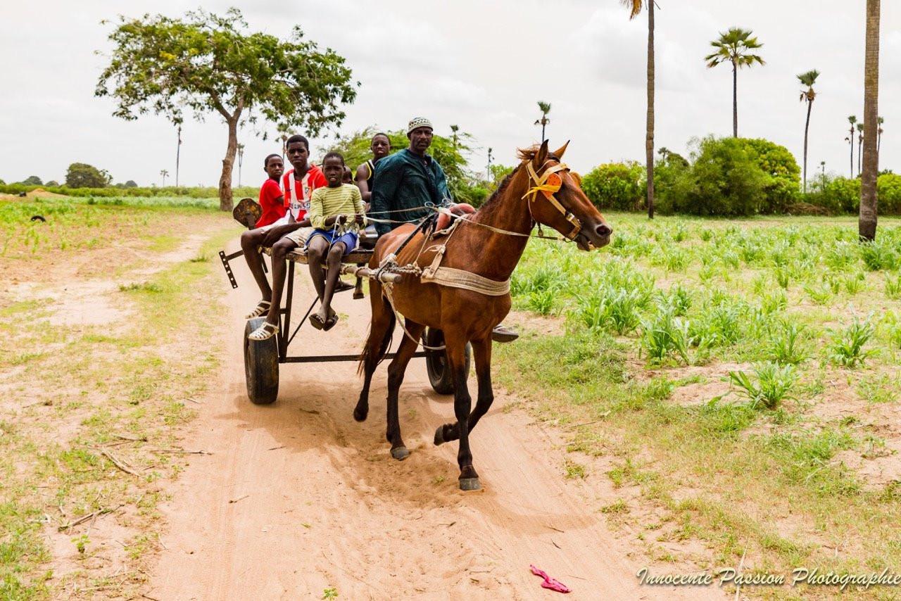 Taxi-Horse Riding