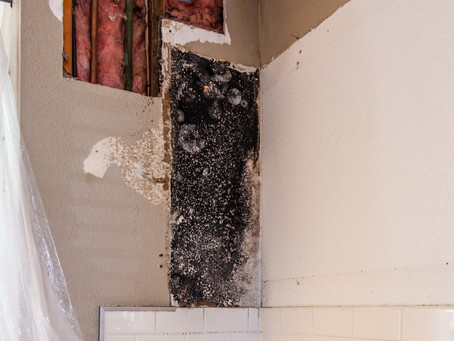 Mold in My House! Installment 5