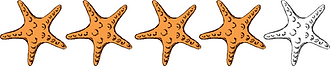 Four Starfish.png