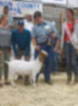 champ mkt goat Jackson co 4-H  WI  Wyatt