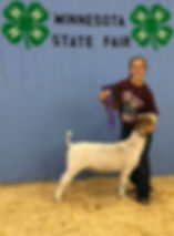 champ middle wt  grand champ mkt doe Mn