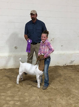 champ mkt goat  Mower Co Open Show  Aubr