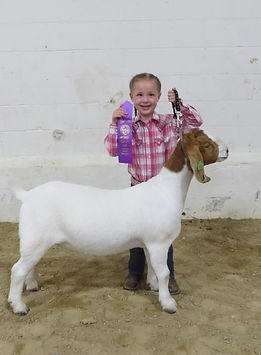 champ Sr doeling Mower Co Open Show  Ale