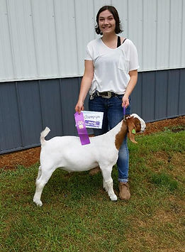 champ mkt goat  Steele co 4-H  Tory Buck