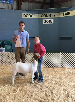 res champ mkt Doe Dodge county 4-H  Aubr