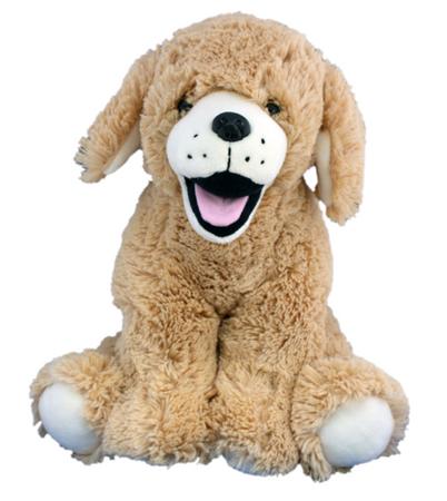 Goldie the Lab/Retriever Dog