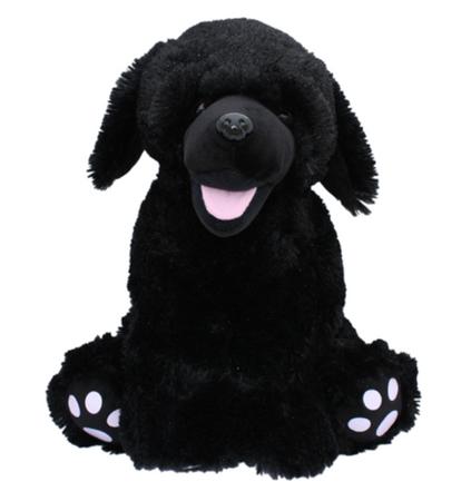 Shadow the Black Lab Dog