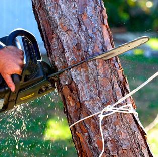 cutting trees 2.jpg