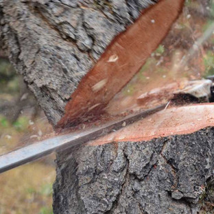 cutting trees 3.jpg