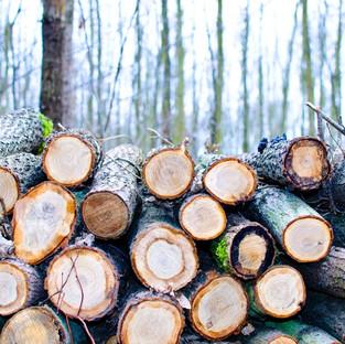 Cutting_Trees.jpeg