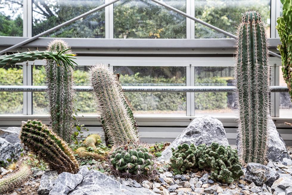 Botanischer Garten Pankow
