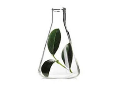 Potent Green Tea  - TeGreen 97(120 Capsules)