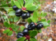 pepper-berry-Australian-native-bush-food