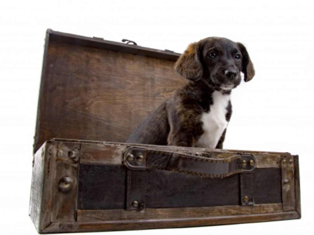 ldd dog2 suitcase.png
