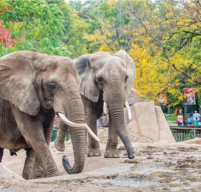Milwaukee County Zoo Elephants