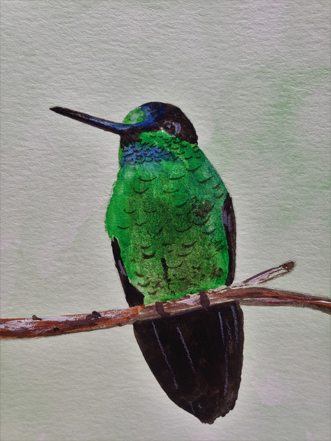 original hummingbird painting