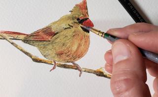 bird painting process