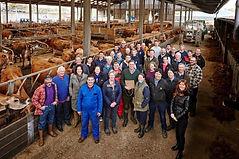jersey dairy.jpg
