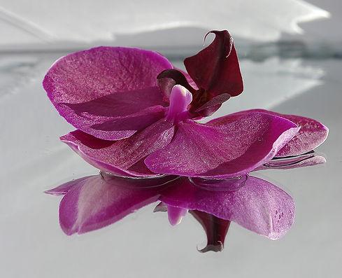 flower-976459_1920.jpg
