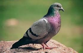 Las aves que habitan en la ciudad