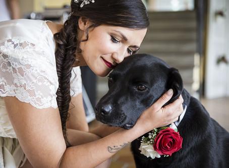 """Matrimonio """"da cani"""" - Veterinario Esperto in Comportamento"""