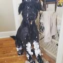 snow boots Oscar