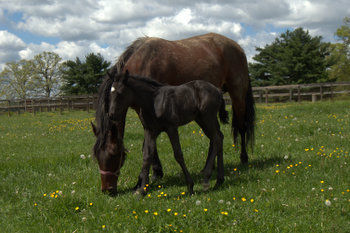 Mare and foal at Lindwood Farm