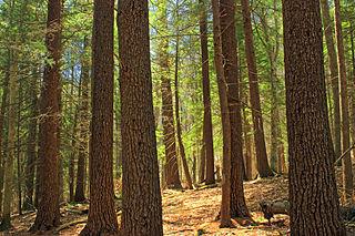 Pennsylvania hardwoods