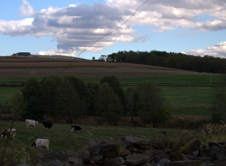 A visit to Pleasant Lane Farms, Unity Township