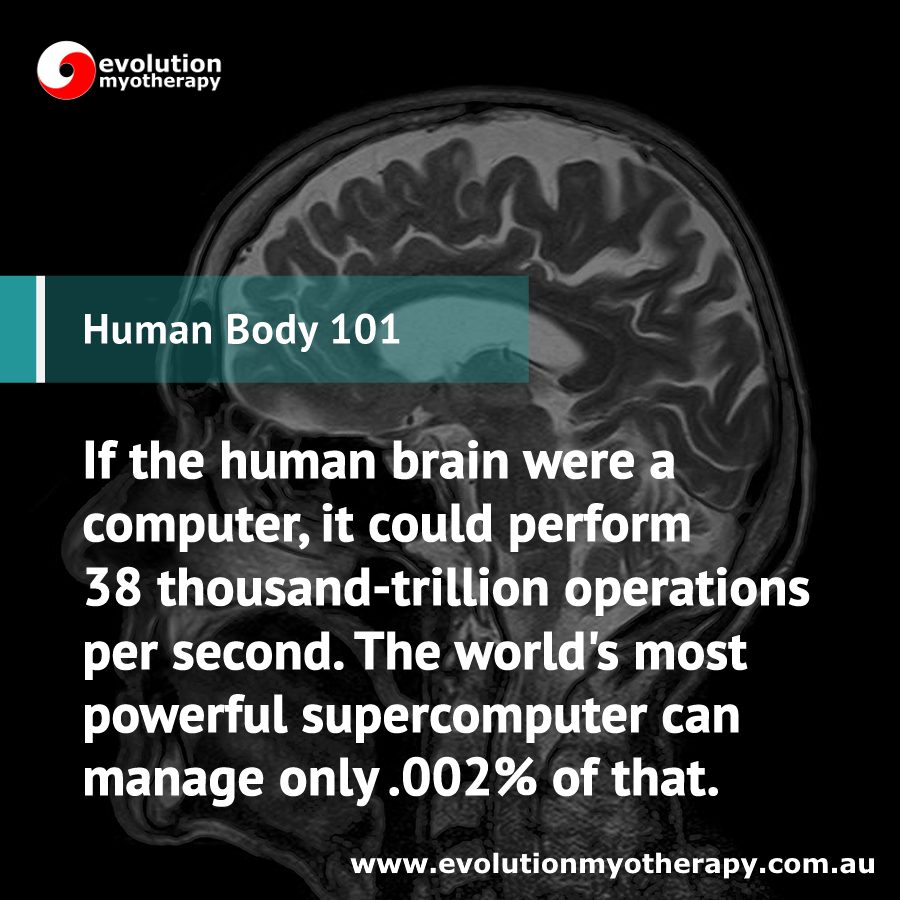 Human Body 101: Brain Processing