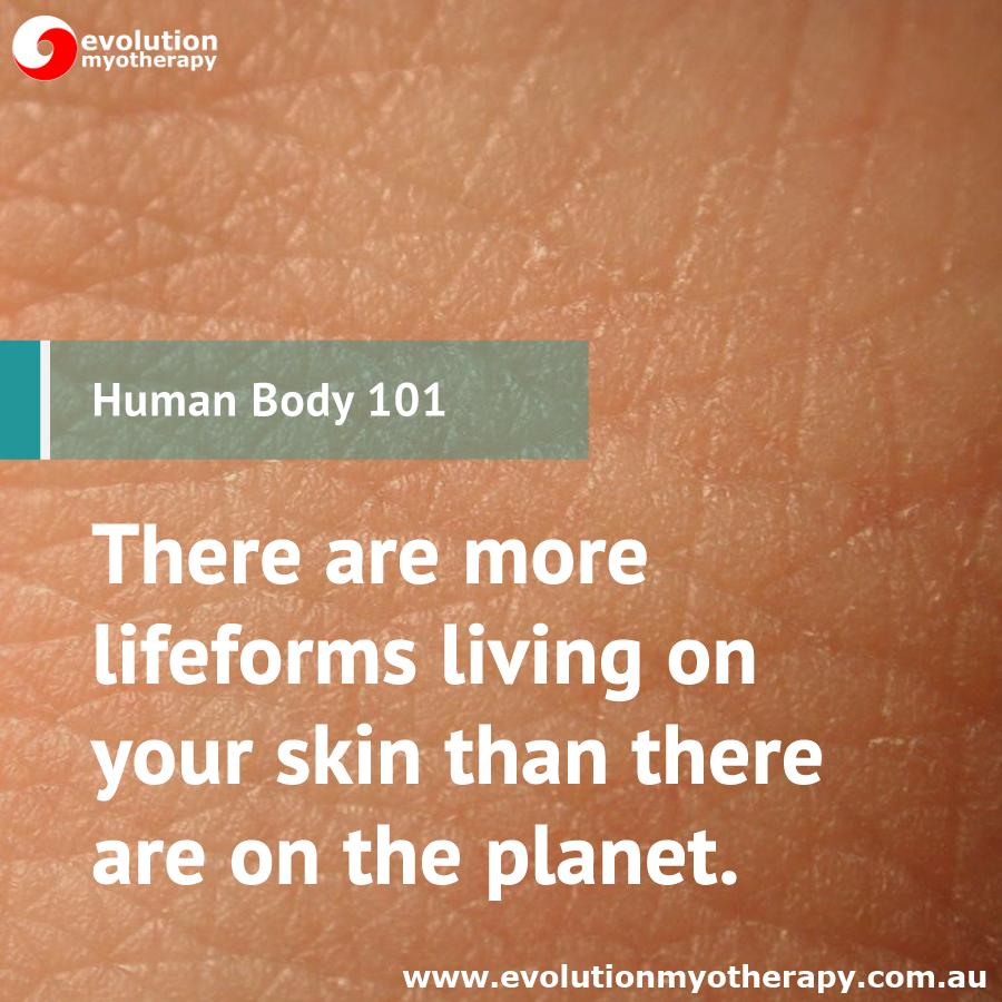 Human Body 101: Skin