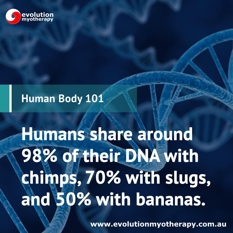 Human Body 101: DNA