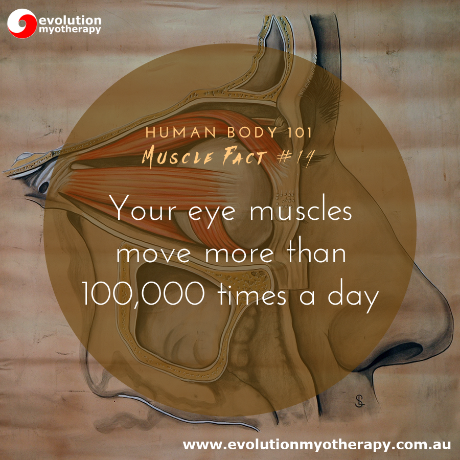 Human Body 101: Muscle Facts #14