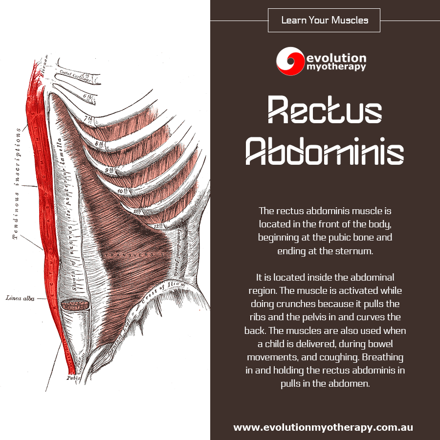 Learn Your Muscles: Rectus Abdominis