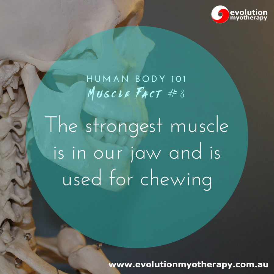 Human Body 101: Muscle Facts #8