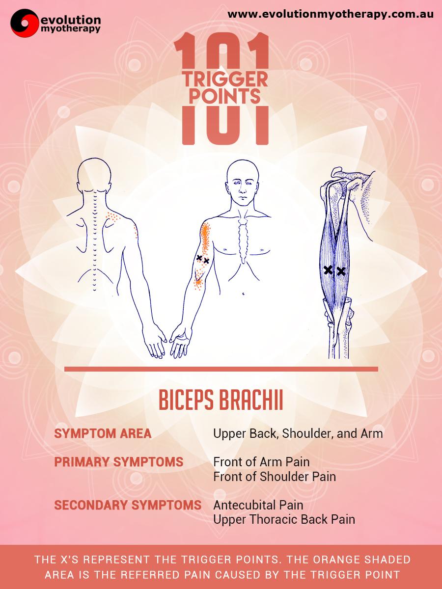 Trigger Points 101: Biceps Brachii