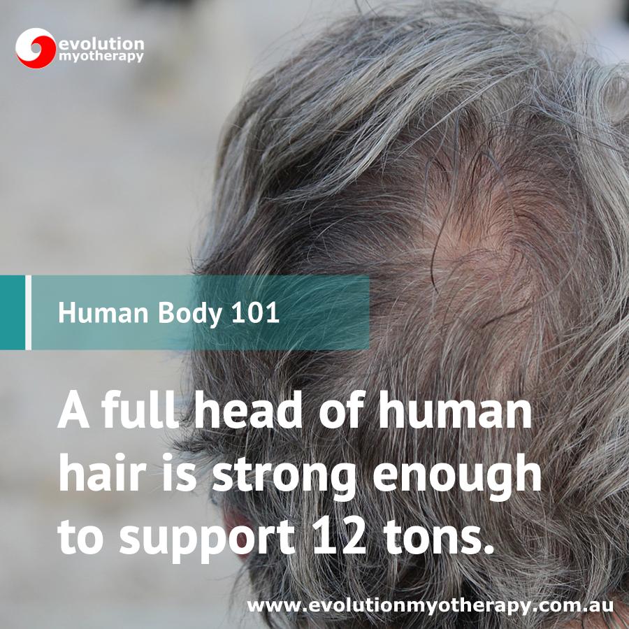 Human Body 101: Hair
